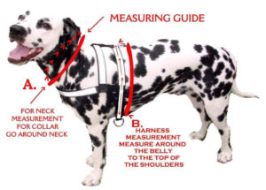 dog collar sizes