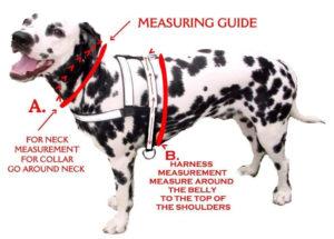 dog collar sizes