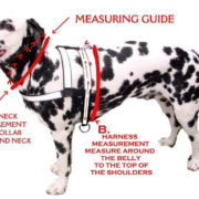 Coleash Collar and Harness Measuring Guide