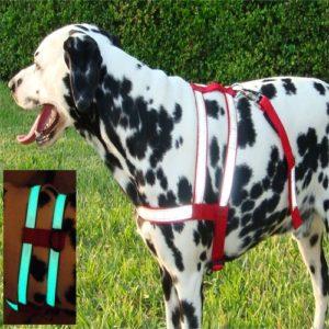 harness glow amaz 500
