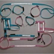 angel-line-harnesses-collars-leashes