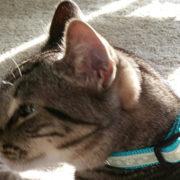 cat-collar