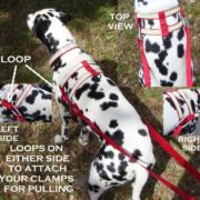 dog-pulling-harness